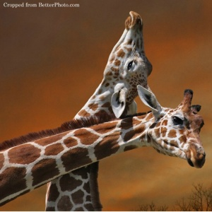 giraffesneck