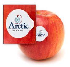arctic-apples-label