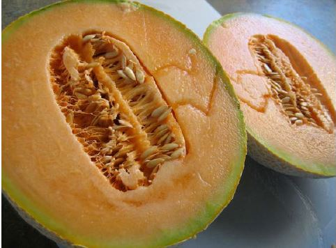 The cantaloupe like all melons is an accessory berry or a pepo due to its rind.