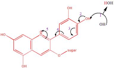 cyanidinmechanism