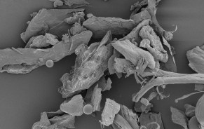 a scanning electron micrograph of dust