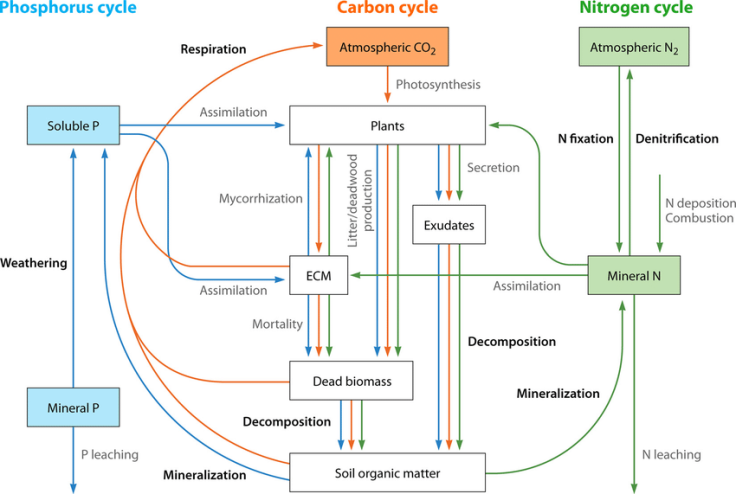Schematic-view-of-the-coupled-biogeochemical-cycles-of-carbon-nitrogen-and-phosphorus