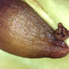 seed_abort